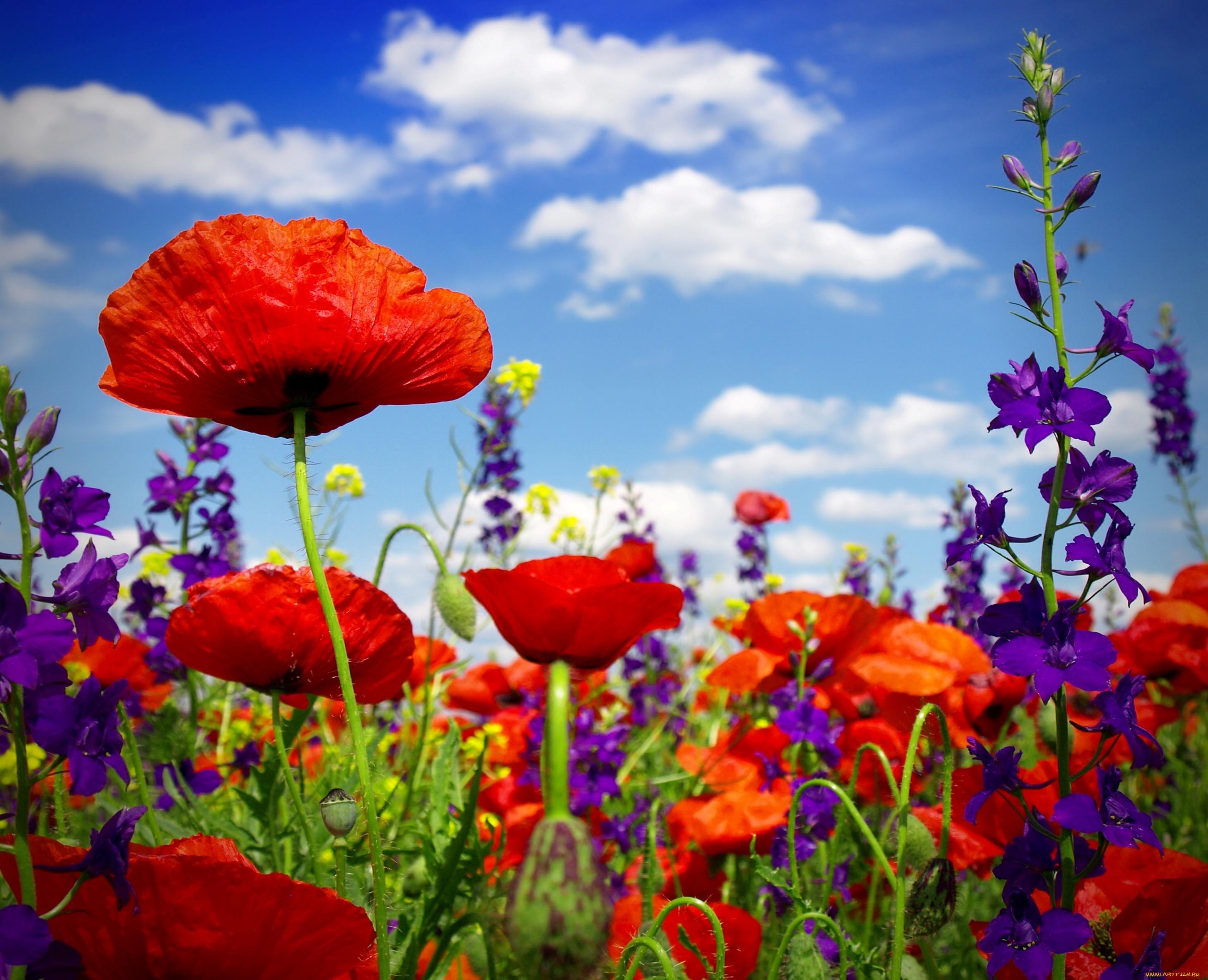 Аквариумные цветы фото фдч используется